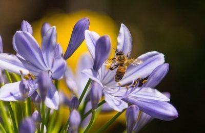 Verbrauch von Insektiziden in Delmenhorst